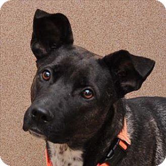 Mia is a Labrador Retriever mix available for adoption in San Diego, CA: http://www.adoptapet.com/pet/8484482-san-diego-california-labrador-retriever-mix