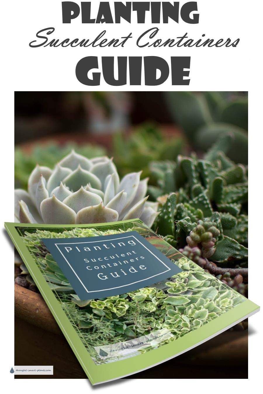 Planting Succulent Containers Guide Sign Up For The Free To Get Your Planters Off A Flying Start Succulents Garden Plant Pots