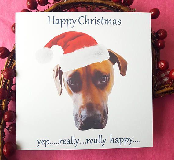 Funny Dog Christmas Cards Bah Humbug Christmas Card Pack For