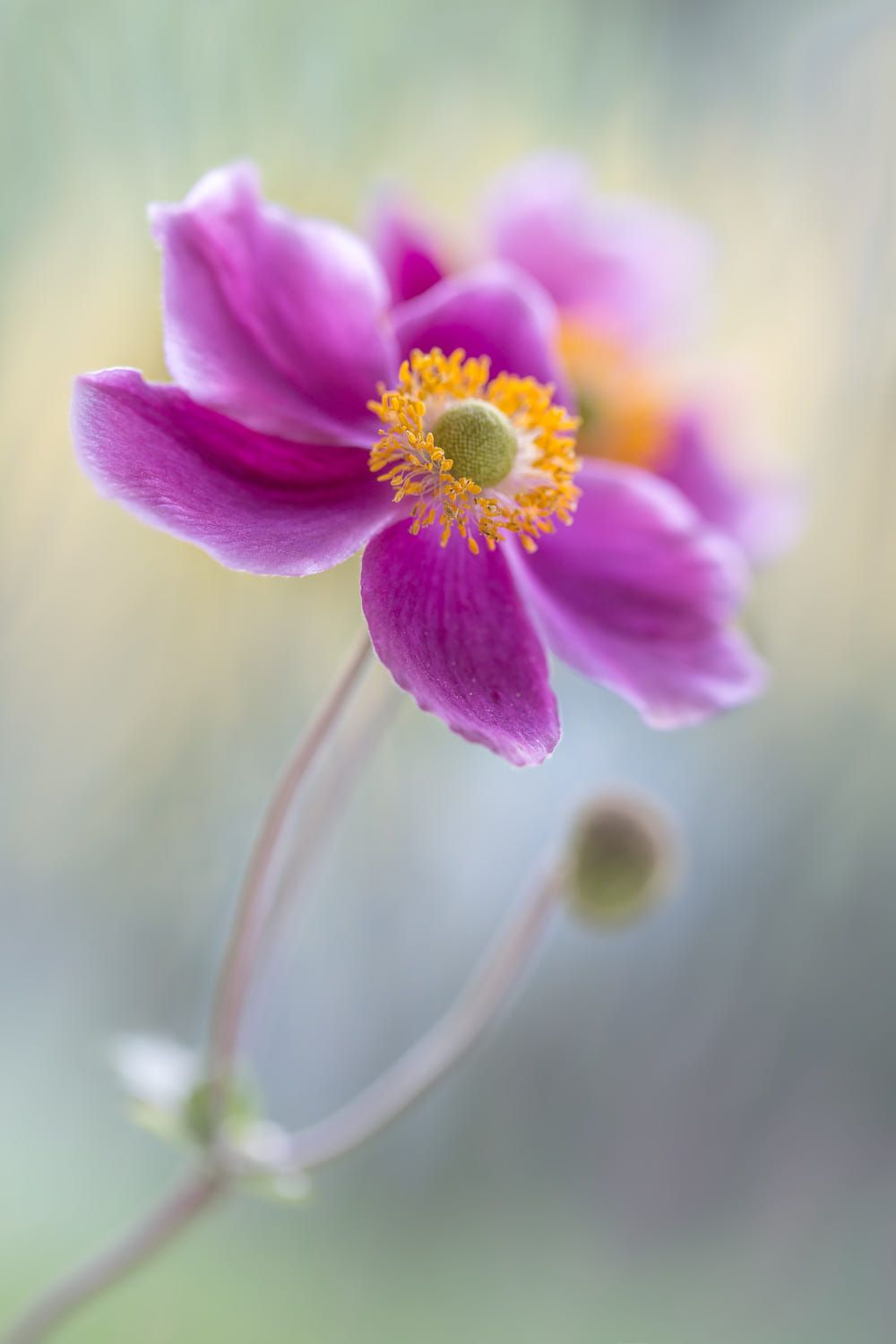 Pin by sonia elizabeth caliuolo on flores pinterest flowers