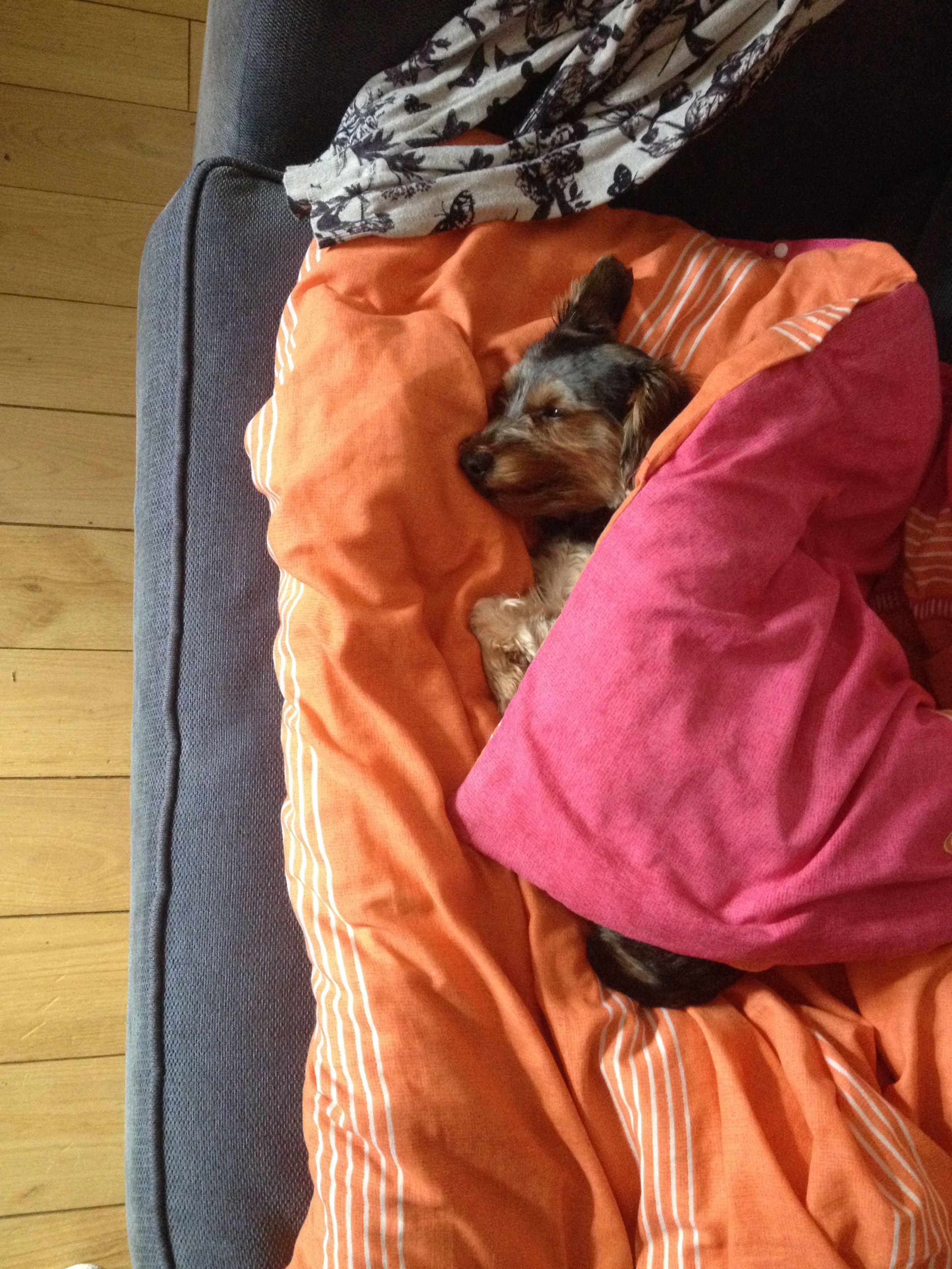 Mmmm, I'm enjoying my sleep in my own duvet...