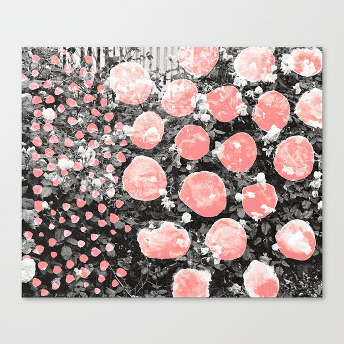 rose blotch