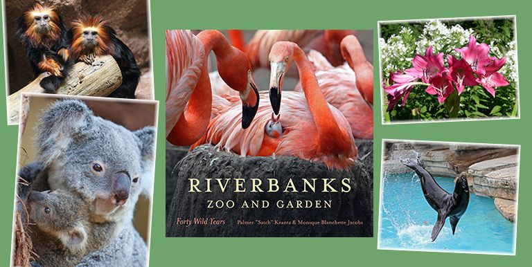 lights before riverbanks zoo riverbanks zoo and garden columbia south carolina wonderful - Riverbanks Zoo Lights Before Christmas