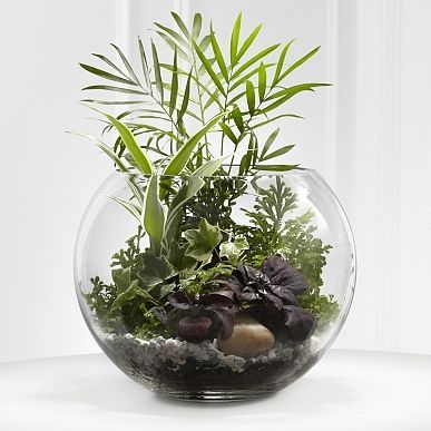 Un mini terrarium fait maison! 20 idées + tutoriel vidéou2026 Растения - mini jardin japonais d interieur