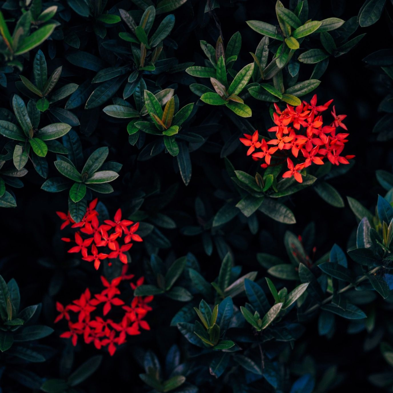 Flowers /  photo by Bea Quisumbing