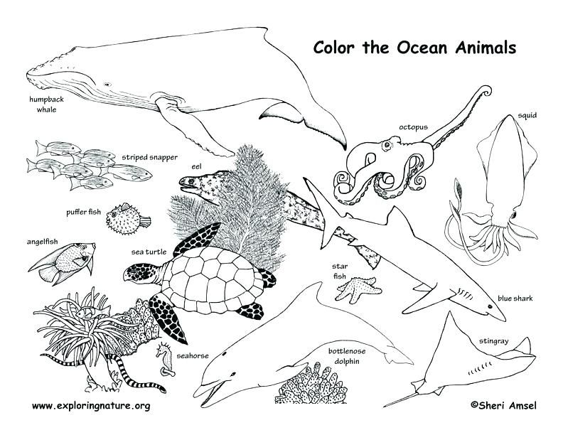 Animal Habitat Coloring Pages Fresh Ocean Animals Coloring Pages And Animal Habitat Color Animal Coloring Pages Ocean Coloring Pages Farm Animal Coloring Pages