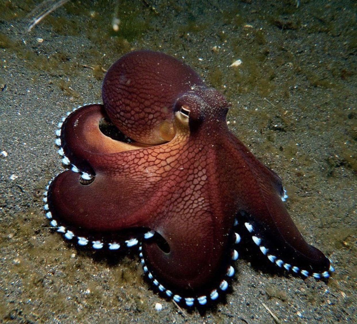 картинка осьминога или спрута прекрасное