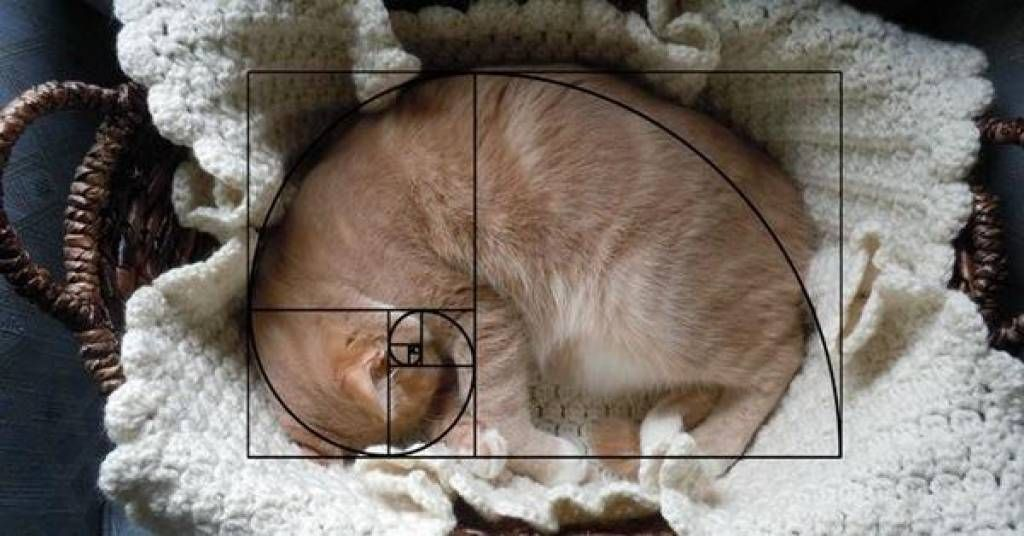 19 Cats That Perfectly Embody The Golden Ratio Funny Cat Faces