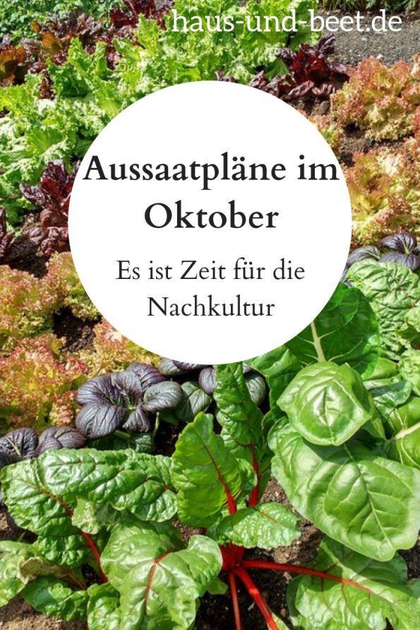 Aussaatpläne im Oktober – Die Nachkultur ist entscheidend #beetanlegen