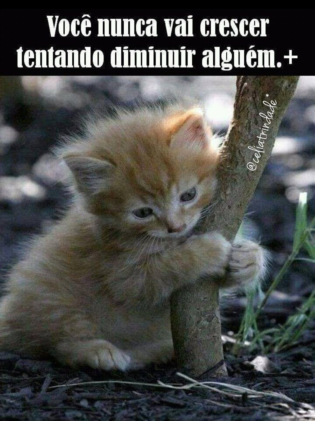 Pin By Celia Trindade On Jesus Kittens Cutest Cats And Kittens Cats
