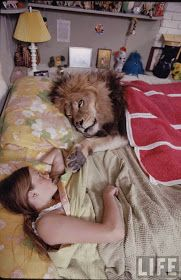 Moon to Moon: House Pets : Togar the Lion...