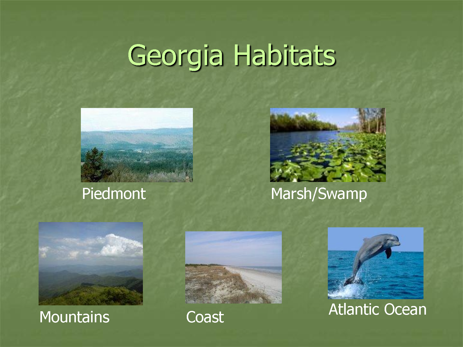 Check Out This Kahoot Called Georgia Habitats And