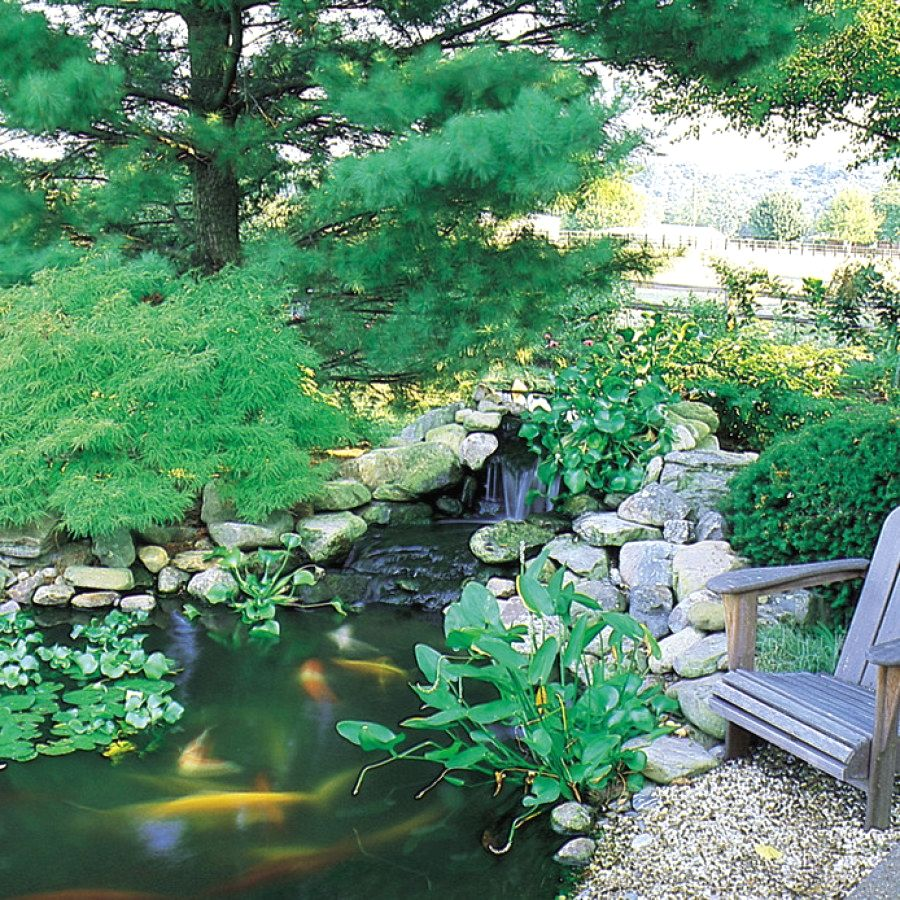 50 Creative Koi Pond Ideas You Can Create Yourself To