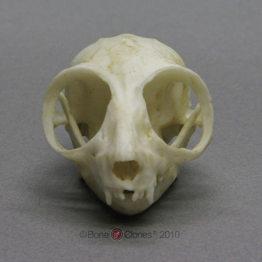 Mouse Skull 3blindmice Skull Skull Bones Skull Reference
