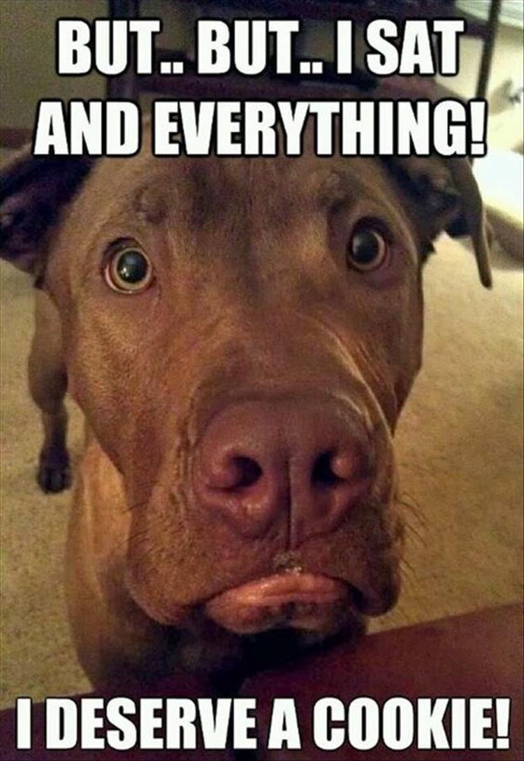 Pitbull Dog Meme Face