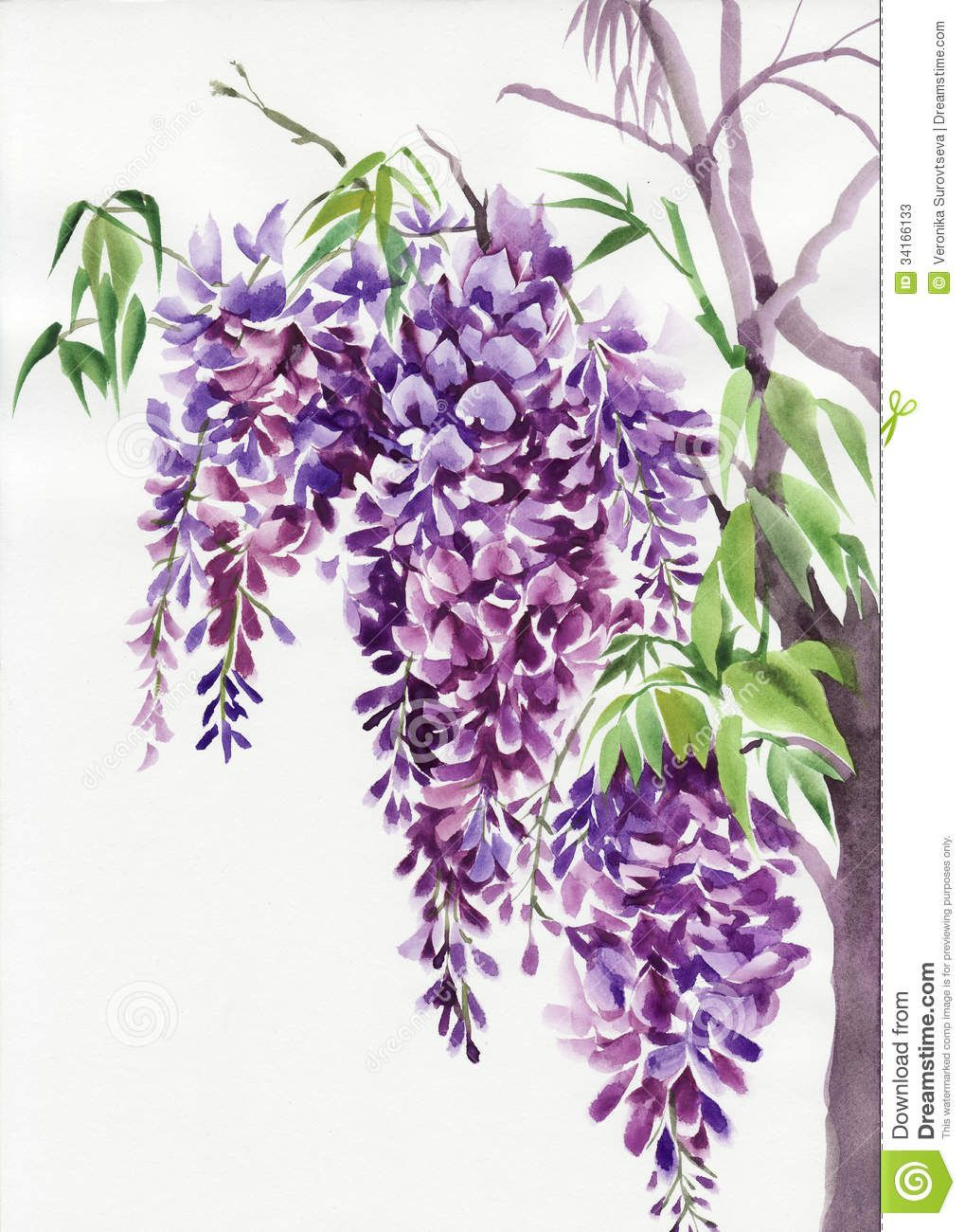 17 Best Images About Wisteria On Pinterest Antiques Wisteria Flower Art Flower Painting Watercolor Flowers