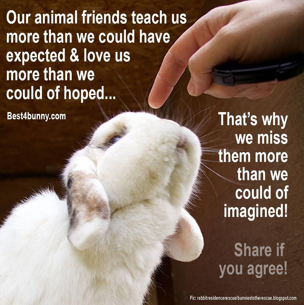 Pin by Iris Hartmann on Rabbits   Rabbit care, Pet rabbit care ...