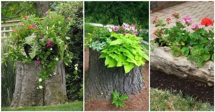 Tree Stump Planters Are The Latest Trend In Home Gardening