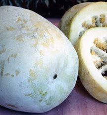 Winter Melon, Oblong Tong Qwa - This variety produces giant fruits, that can be up to 16-24 long and 12-16 across. This large size Winter Melon is very popular in Taiwan and subtropical Asia. #wintermelon Winter Melon, Oblong Tong Qwa - This variety produces giant fruits, that can be up to 16-24 long and 12-16 across. This large size Winter Melon is very popular in Taiwan and subtropical Asia. #wintermelon Winter Melon, Oblong Tong Qwa - This variety produces giant fruits, that can be up to 16 #wintermelon