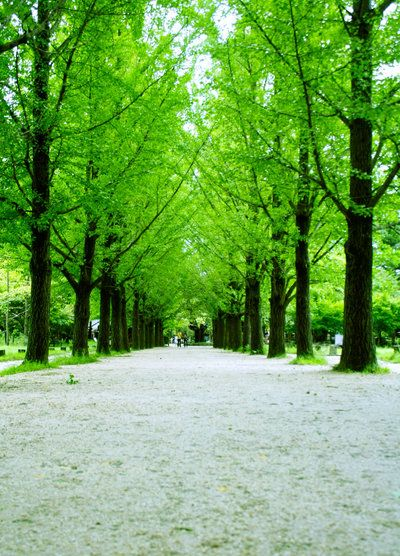 Go To Nami Island Green Nature Quotes Island Wallpaper Green Nature
