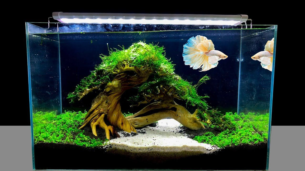 Make Beautiful Aquarium Very Simple Diy Nano Aquascape For Betta Fish Mr Decor 2020 Betta Aquarium Betta Fish Tank Aquarium Landscape