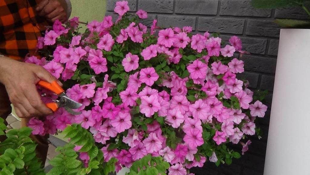 Jak Dbac O Rosliny Kwitnace W Donicach Zielone Pogotowie Blog Floral Wreath Floral Wreaths