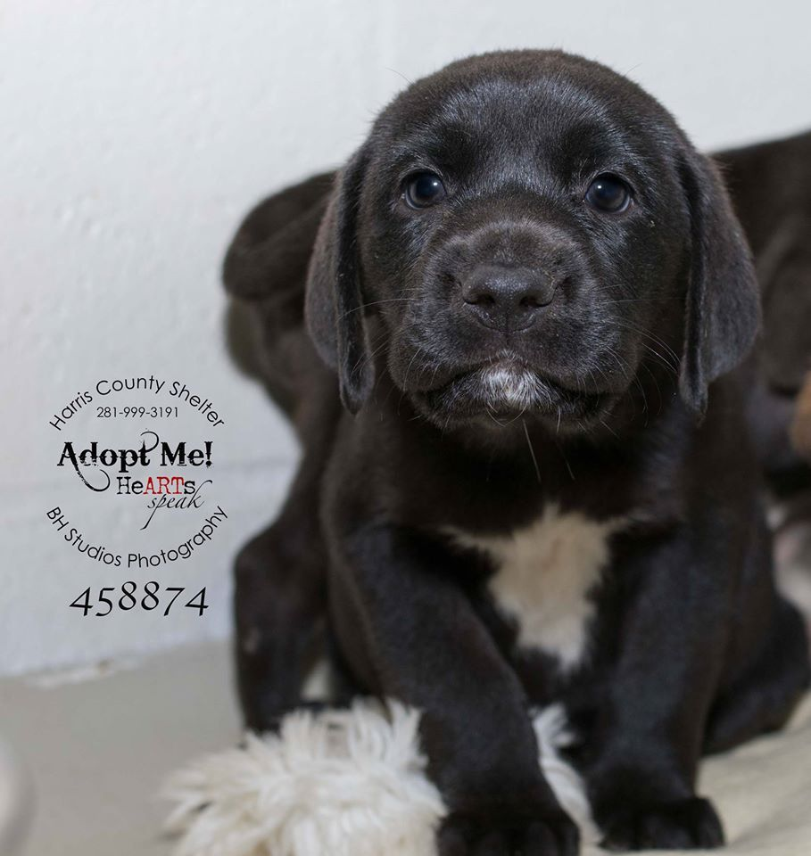 Bh Studios This One Is Critical Too I Think This One Animals Homeless Pets Dog Adoption