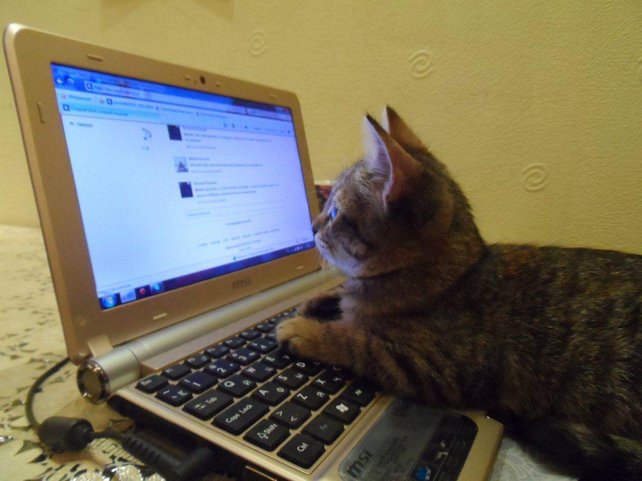 разумеется, картинки в интернете кошки бывает так, что