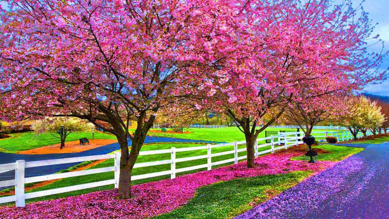 Springtime HD desktop wallpaper High Definition Fullscreen