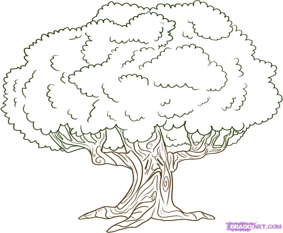 How To Draw An Oak Tree By Dawn Tree Drawing Oak Tree Drawings