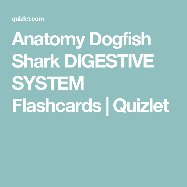 Anatomy Dogfish Shark Digestive System Flashcards Quizlet