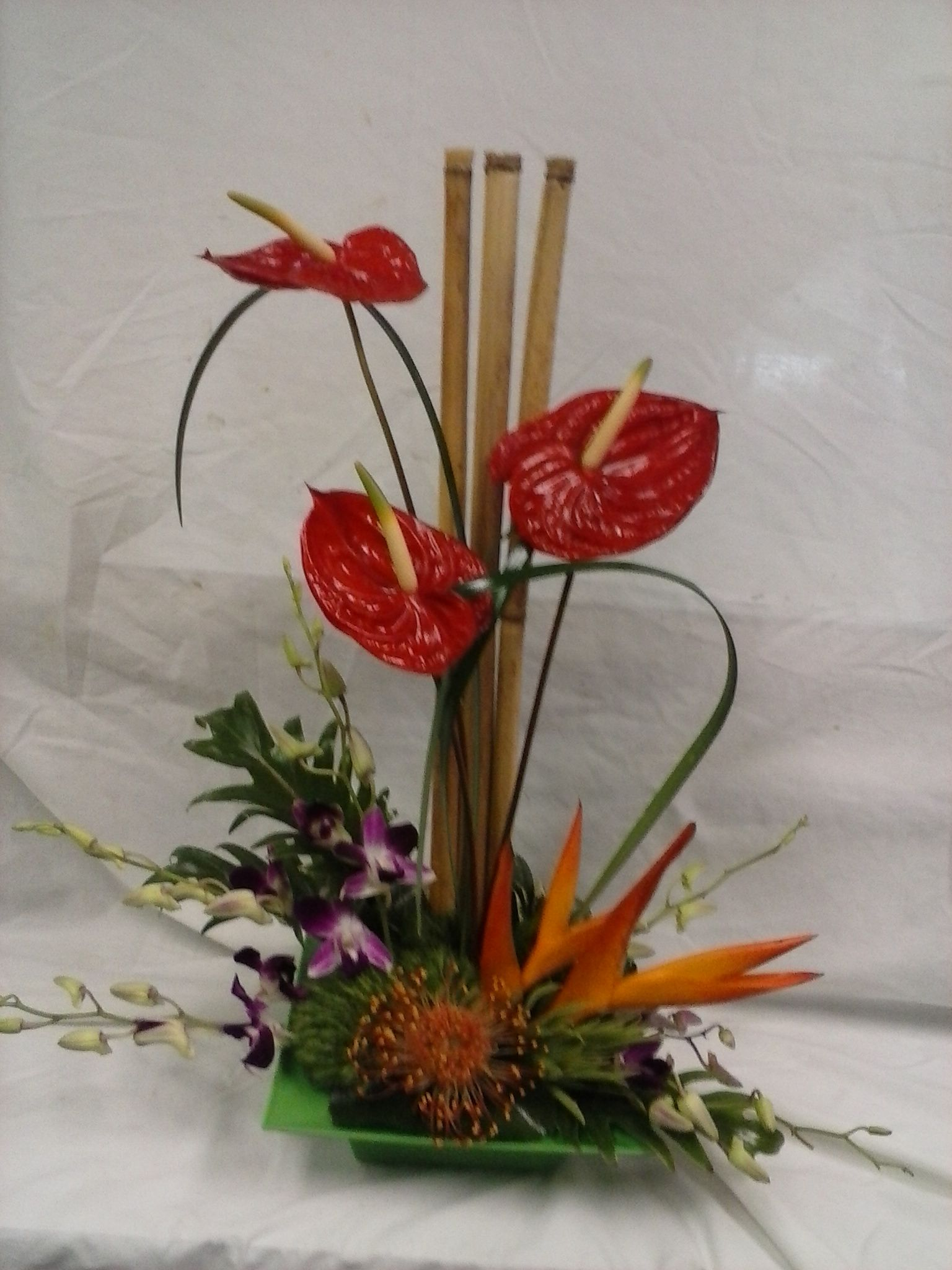 Red Anthuriums Proteas And Orchids Modern Flower Arrangements Modern Flower Anthurium