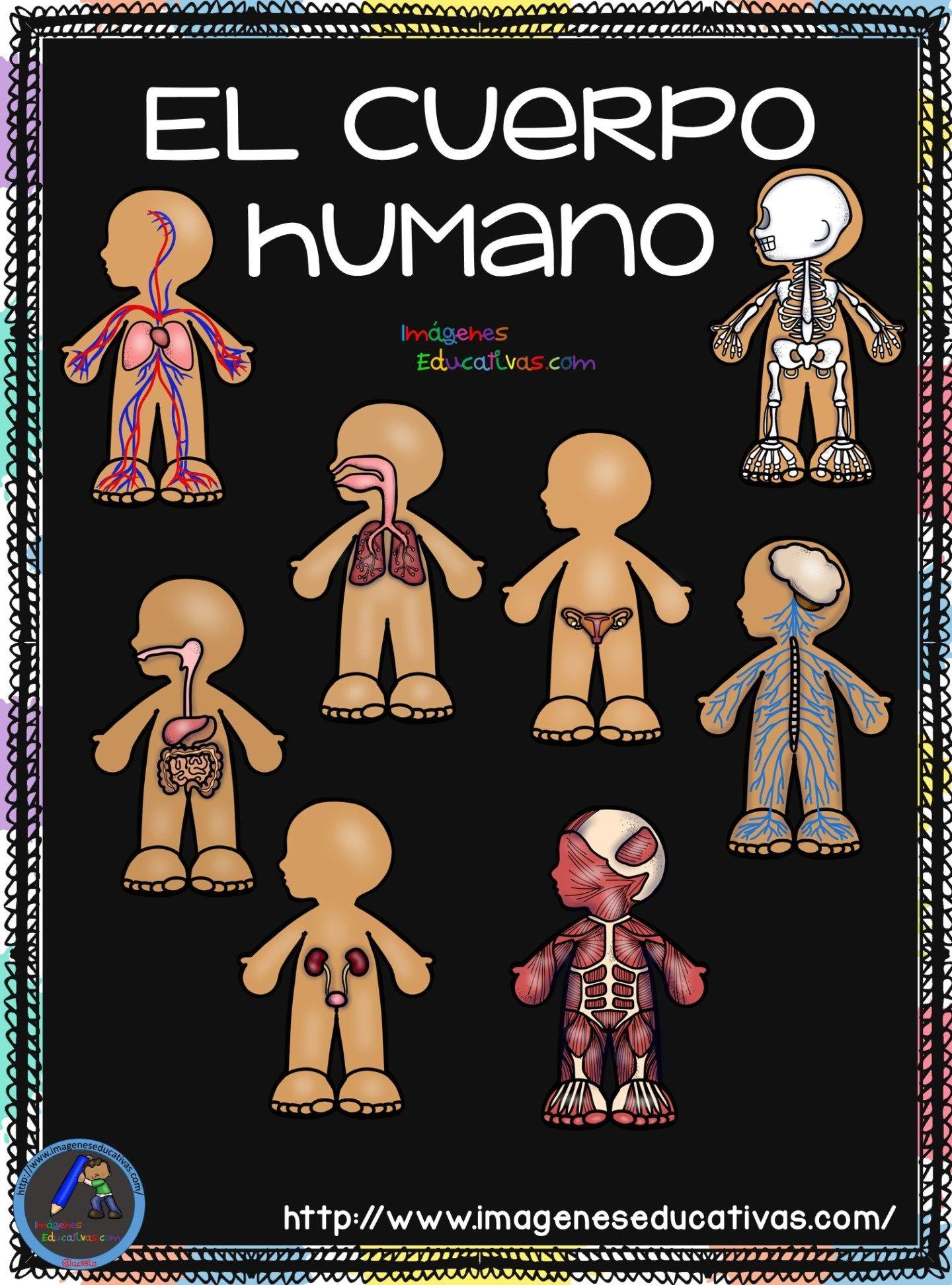Cuaderno del Cuerpo Humano; Aparatos y Sistemas para trabajar en Primaria |  Sistemas del cuerpo humano, Cuerpo humano y Cuerpo humano para niños