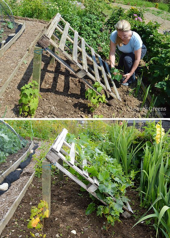 Pallets in the garden: useful DIY gardening ideas