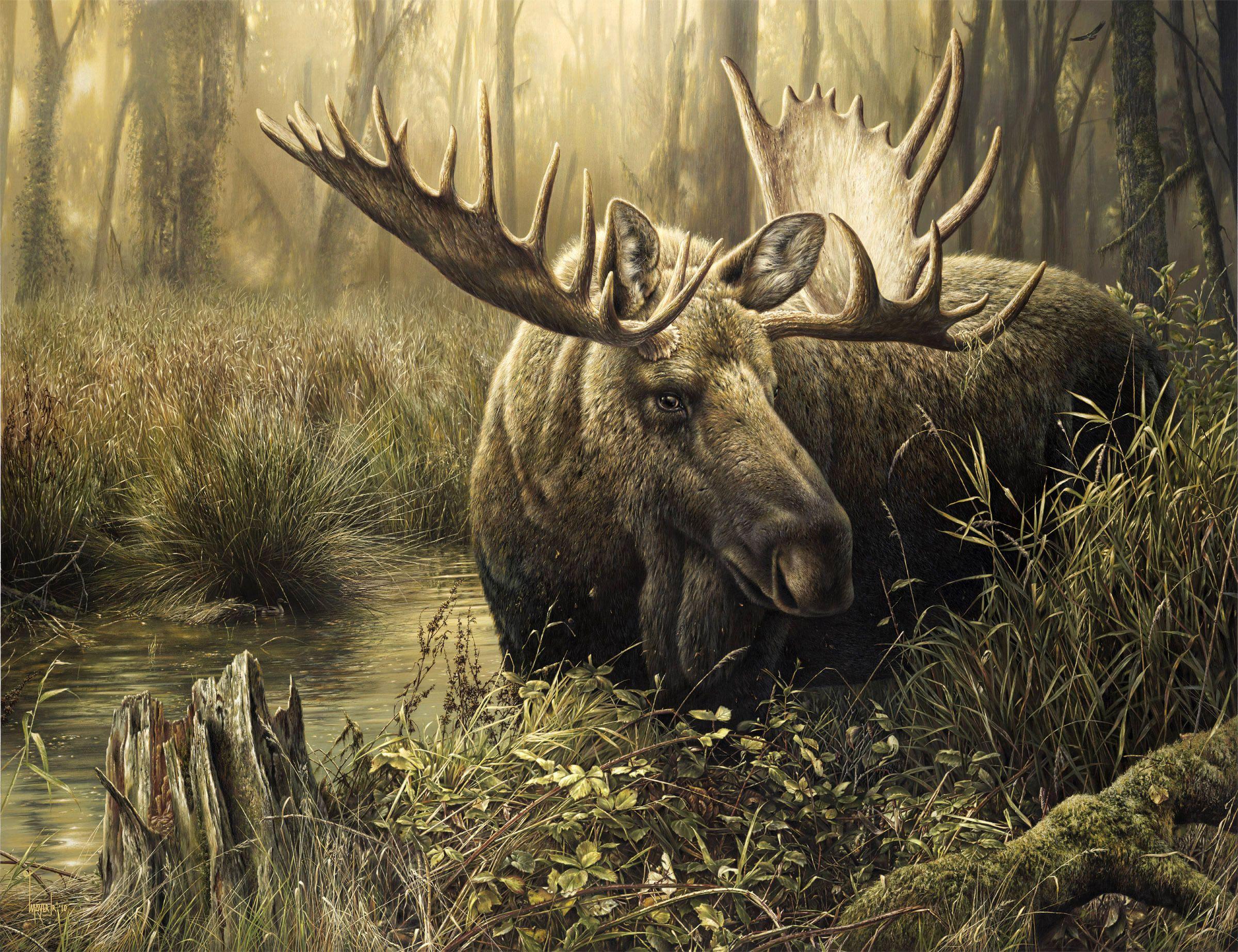 Moose Wallpaper Google Search Wildlife Paintings Animal Paintings Wildlife Artists
