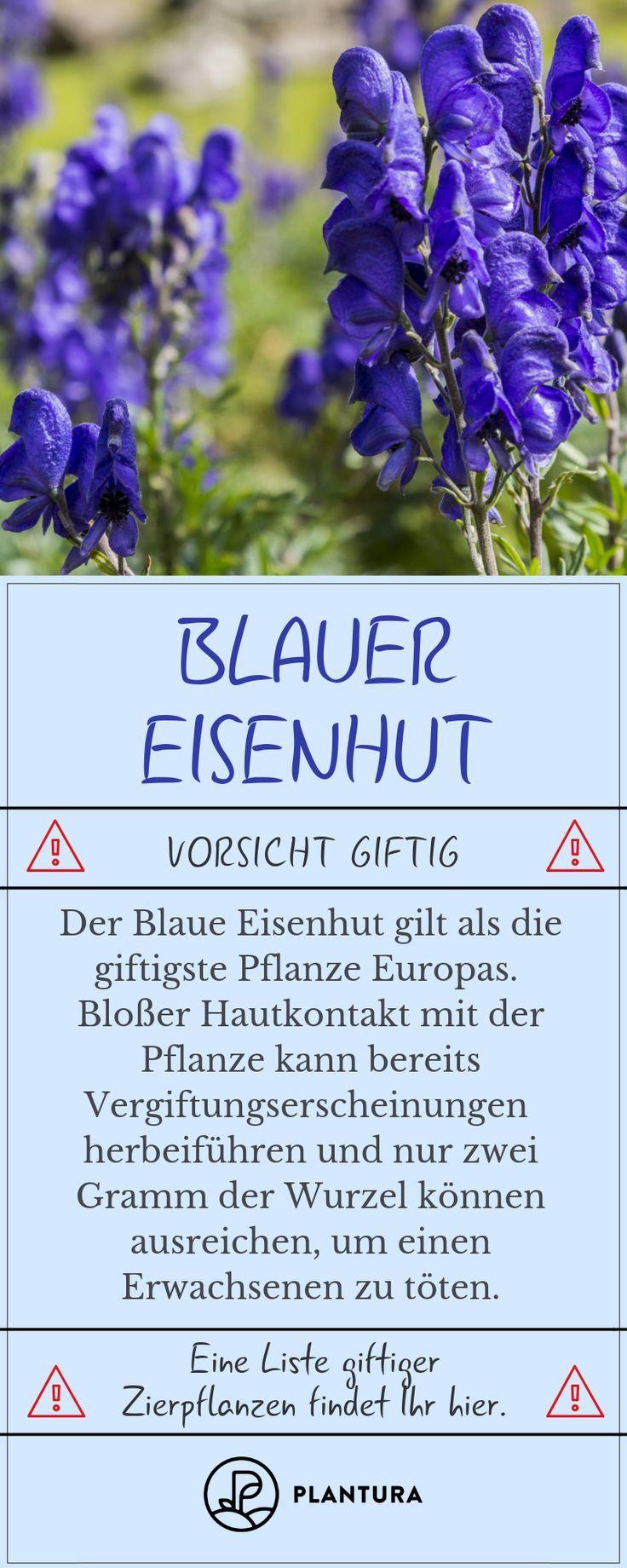 Liste Giftiger Zierpflanzen Giftiger Liste Zierpflanzen