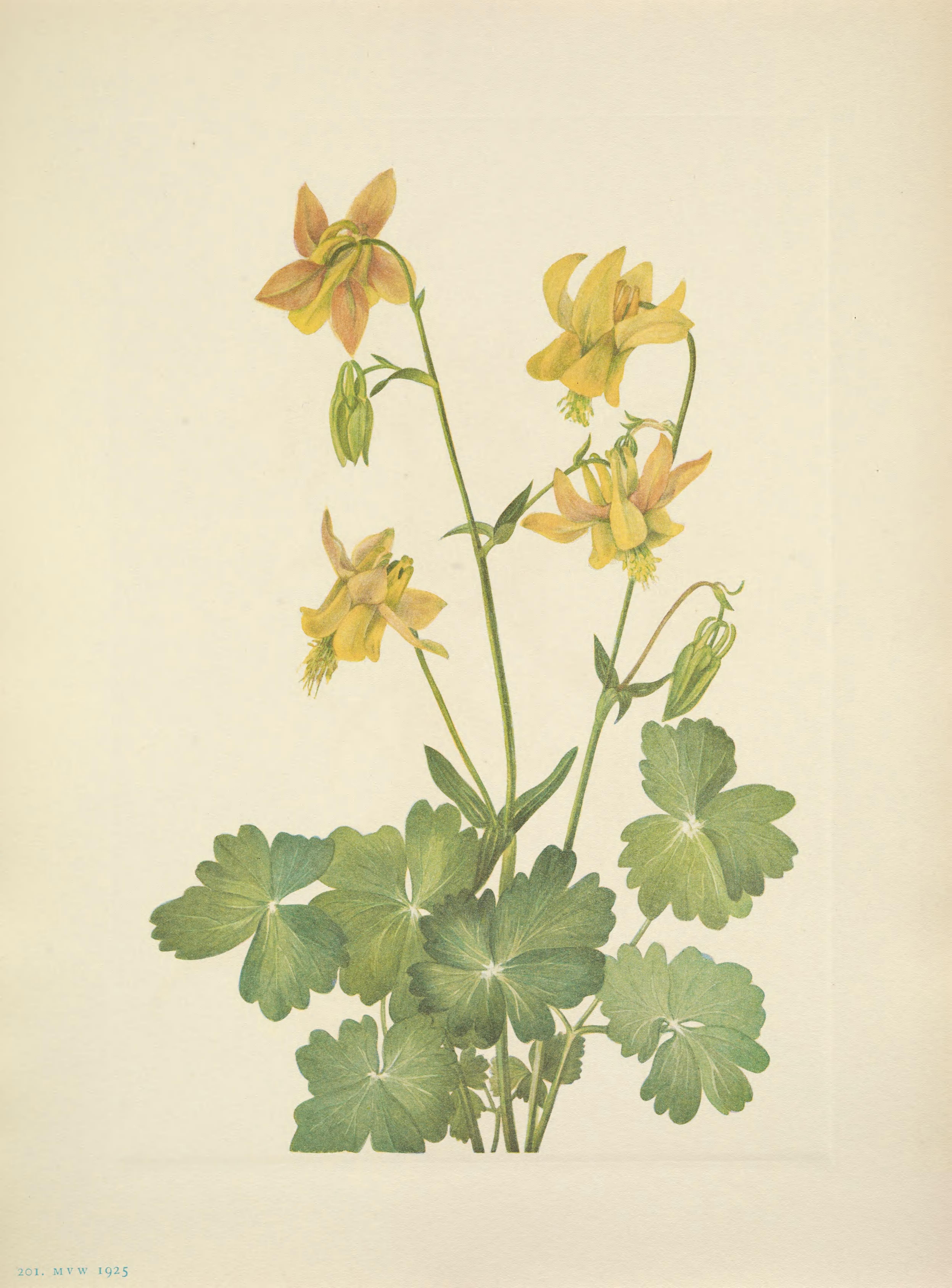 Pin On Flower Illustrations