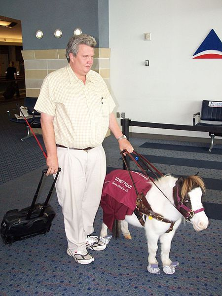 Some disabled people use seeing eye mini-horses.