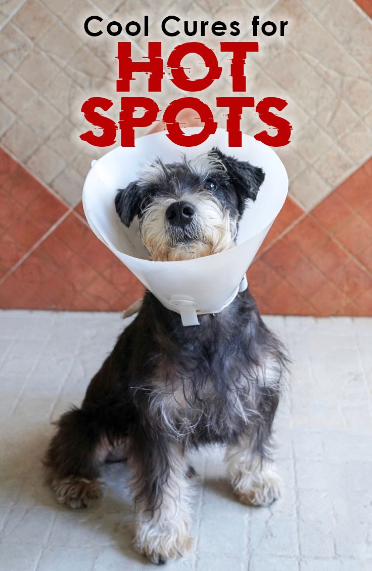 While hot spots can be alarming to owners and painful for