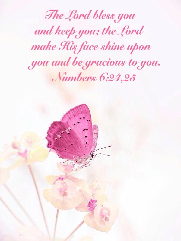 Pin On More Butterfly Bible Quotes
