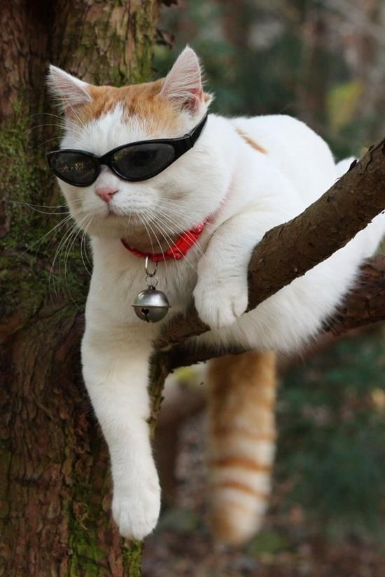 Hanging Out Here Waiting For Spring To Sprung Cats Cute Animals Animals