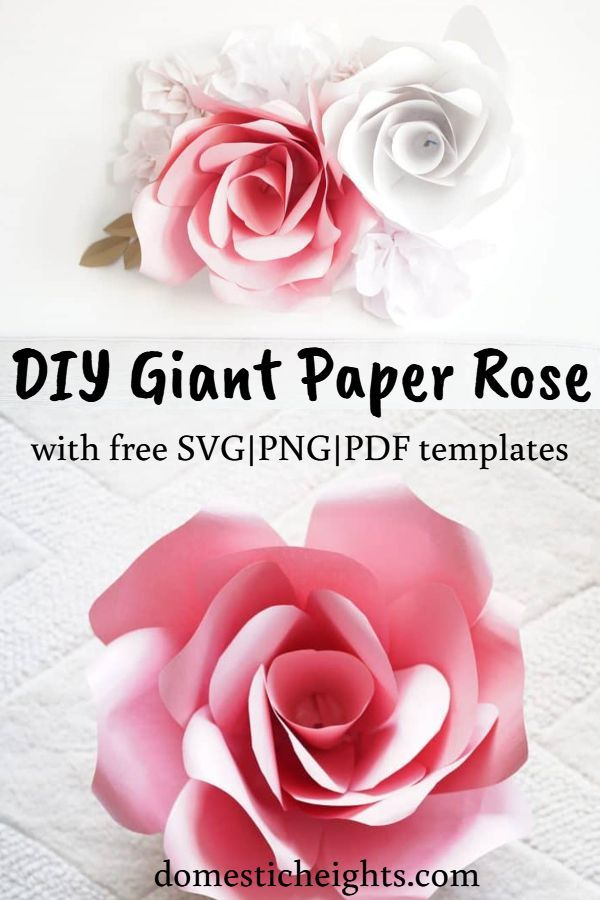 Giant Paper Rose Template and Tutorial #largepaperflowers
