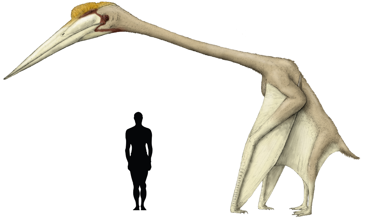 Hatzegopteryx Size Prehistoric taxonomy  ...