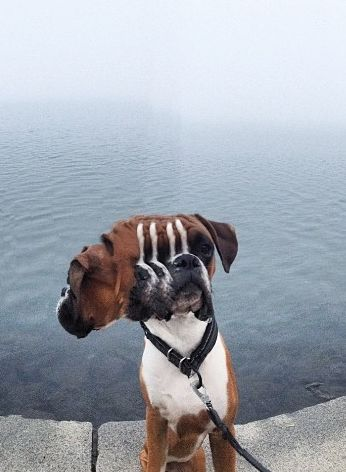 Dog Sees Mom Taking Cute Picture And Ruins Shot