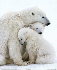 Orsi polari...tenerissimi!!!!