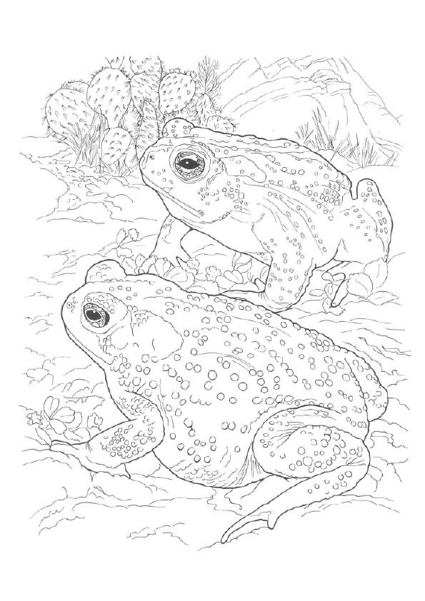 Sonoran Desert Toad Frog Coloring Pages Desert Animals Coloring Animal Coloring Pages