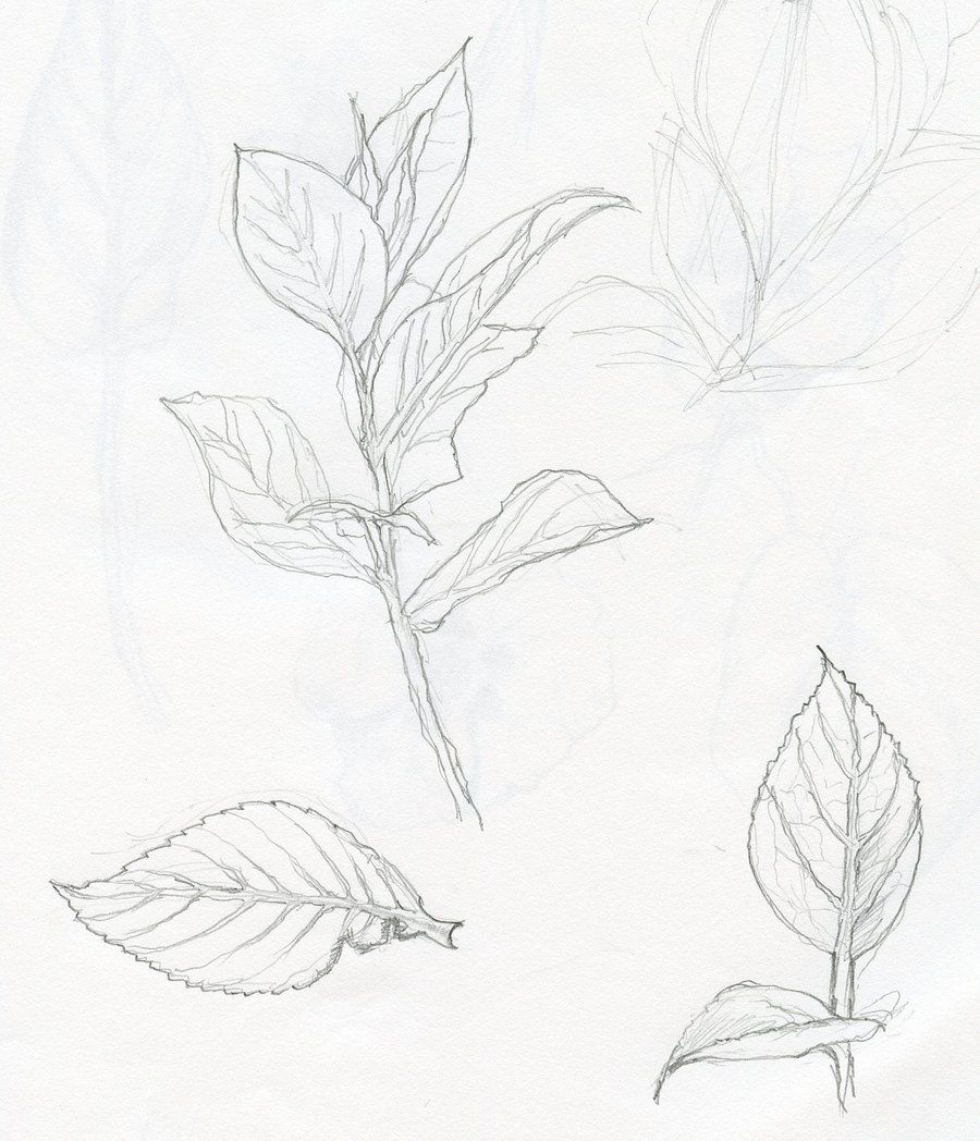 Plant pencil line drawing google search how to draw realistic