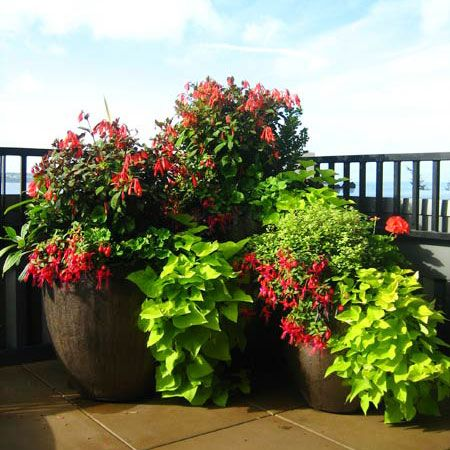 Working with Seasonal Color Pots LLC enables you to have your dream garden space while ensuring the job is done right.