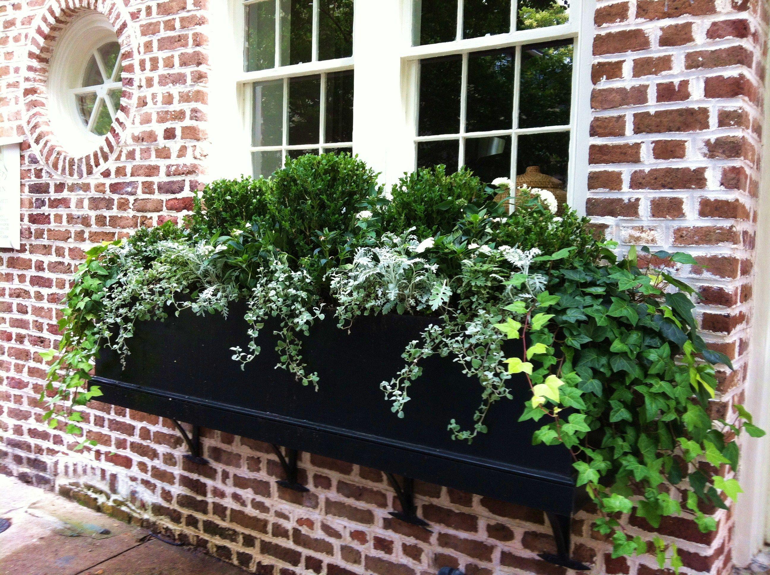 charleston sc windowbox pots de fleurs pinterest balkonk sten bepflanzung und balkon. Black Bedroom Furniture Sets. Home Design Ideas