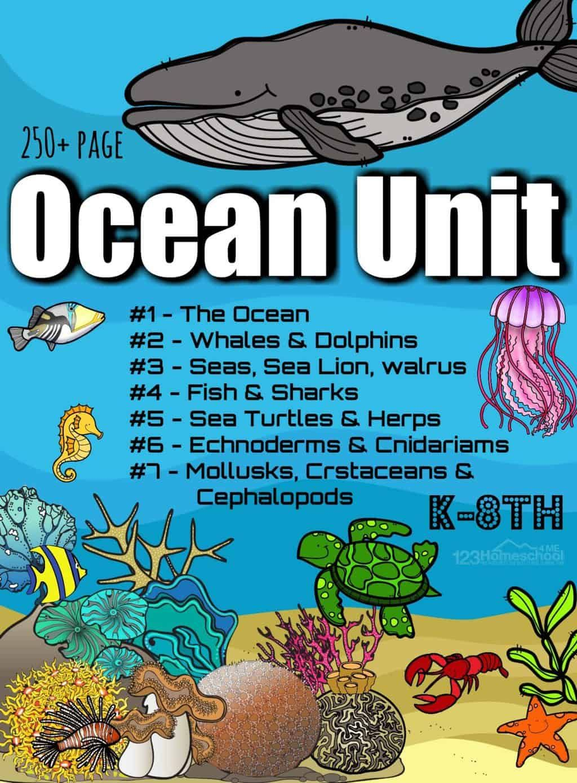Huge Ocean Animals Lesson In